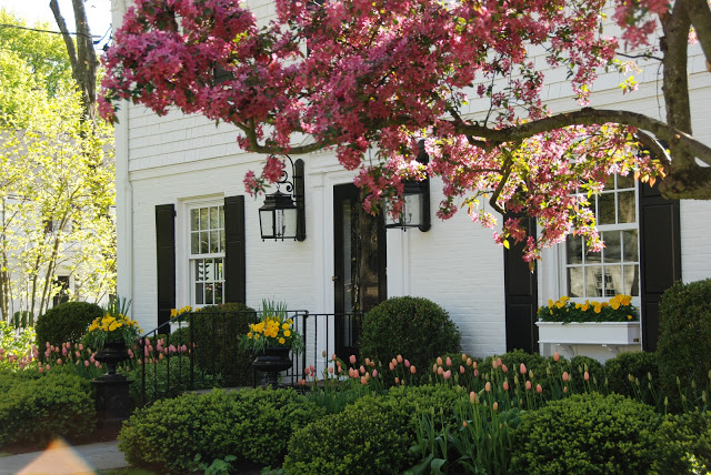 Pretty Pink Tulips House Photo