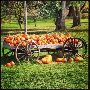 Overflowing Pumpkins