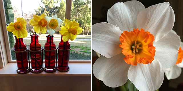 Flower-Close-Up