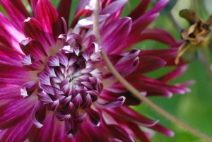Tovah-Flowers