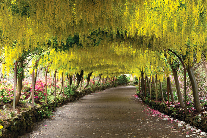 Laburnum Arch at Bodnant Gardens from European Treasures
