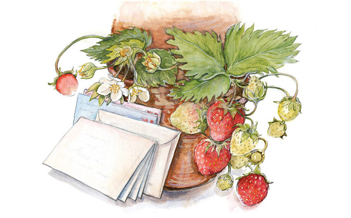 Illustration of strawberry plant for Ann Dorer essay