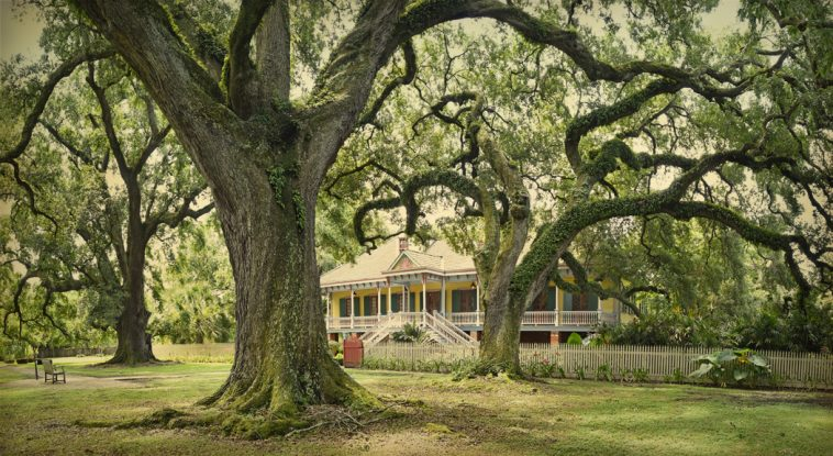 Spring in New Orleans Plantation Country