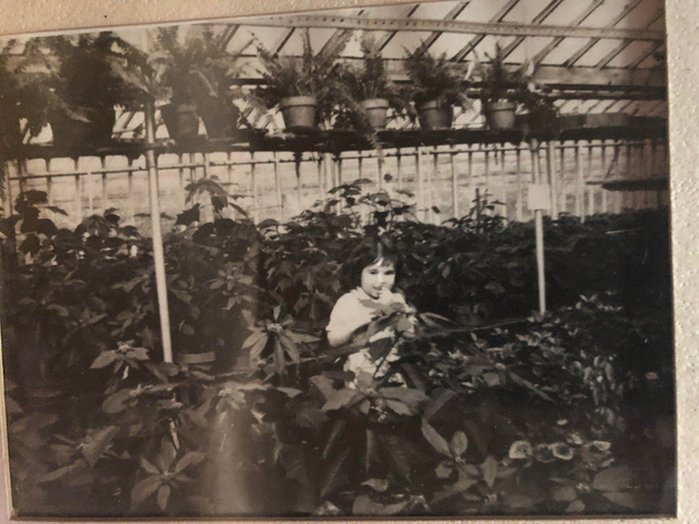 Wendy's mom as a little girl in the poinsettias.
